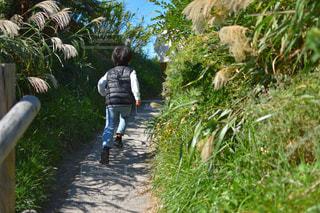 秋,綺麗,未来,幸せ,最高,秋空,ポジティブ,目標,前に進む