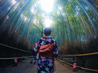 女性,京都,緑,綺麗,後ろ姿,女の子,浴衣,可愛い,最高