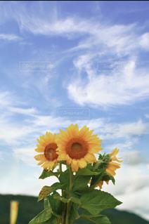 花のクローズアップの写真・画像素材[3497786]