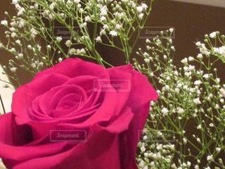 自然,風景,花,赤,バラ,プレゼント