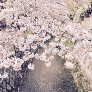 花の写真・画像素材[406645]