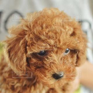 犬の写真・画像素材[11591]