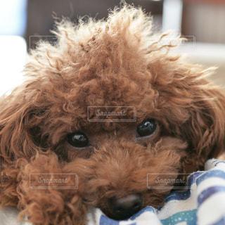 近くに犬のアップの写真・画像素材[975300]