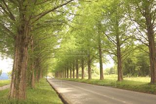 背景に緑豊かな公園の道路側の木のパスの写真・画像素材[1024782]