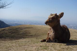 背景の山をフィールドに羊の立っています。の写真・画像素材[1026350]