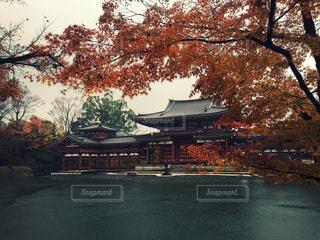 秋,紅葉,京都