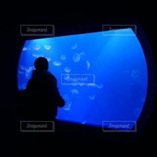 男性,20代,屋内,東京,水族館,人物,人,ブルー,クラゲ,水槽