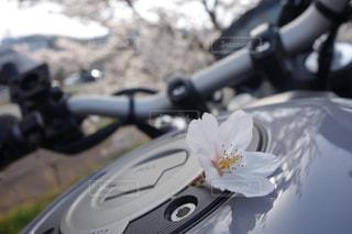 春,桜,バイク,季節,花びら,卒業,桜の木,春桜