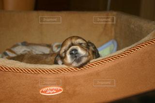 犬の写真・画像素材[474362]