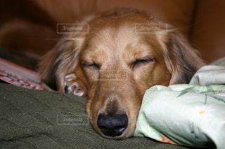 犬の写真・画像素材[474368]