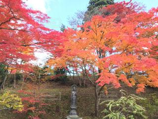 木の赤い花の写真・画像素材[773230]