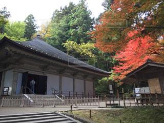 中尊寺金色堂の写真・画像素材[788725]