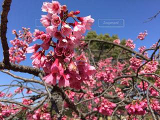 自然,春,屋外,花見,お花見