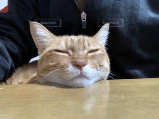 猫,動物,屋内,部屋,テーブル,ペット,人物,ネコ