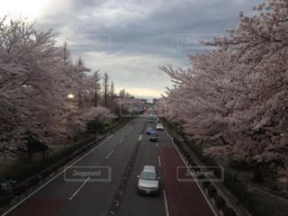 春の写真・画像素材[403835]
