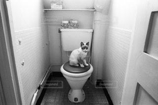 猫,マイホーム,フランス,パリ,トイレ