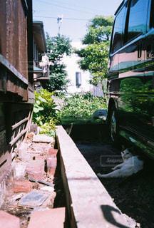 日陰で涼むネコの写真・画像素材[3275738]