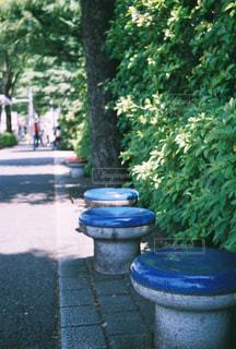青いベンチの写真・画像素材[3275739]
