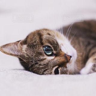 猫のクローズアップの写真・画像素材[2310223]