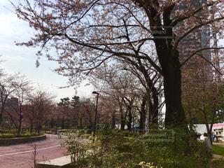 春 - No.404022