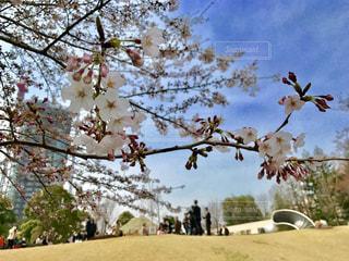春 - No.404033