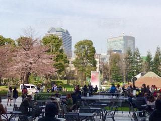 春 - No.404542
