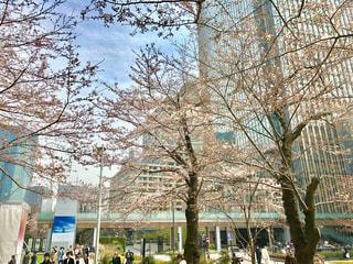 春の写真・画像素材[404544]