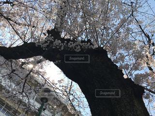 春 - No.412538