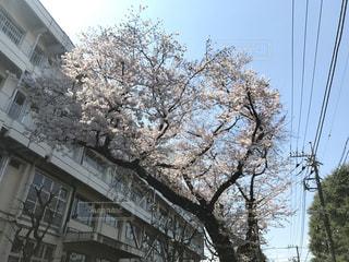 春 - No.412545
