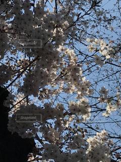 春 - No.413279