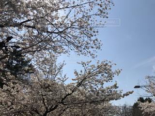春の写真・画像素材[414864]