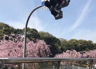 春の写真・画像素材[414876]