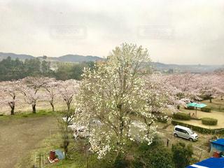 風景 - No.420719