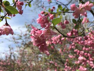 風景 - No.427910