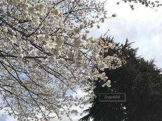 風景 - No.427968