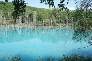 近くに池のアップの写真・画像素材[909235]
