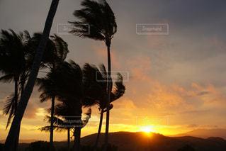 日没の前にヤシの木の写真・画像素材[965254]