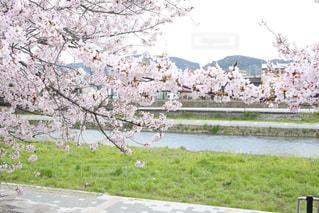 花の写真・画像素材[427488]