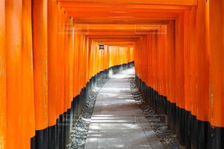 伏見稲荷大社とオレンジの写真・画像素材[1015718]