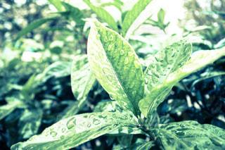 雨,屋外,緑,水,草,雫,梅雨,街中,天気,雨の日,かさ,垂れる,一粒