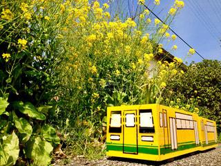 風景,花,春,駅,かわいい,電車,綺麗,菜の花,鮮やか,旅,プランター,イエロー,手作り,のんびり,ホーム,黄,千葉県,きいろ,yellow,多彩,いすみ市,電車旅