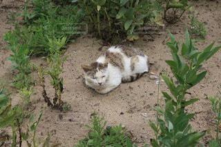 猫の写真・画像素材[27734]