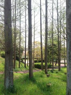 自然,春,緑,景色,堺市,泉北,泉ヶ丘