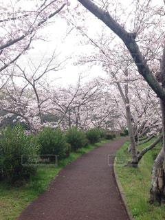 自然,春,景色,堺市,泉北,泉ヶ丘
