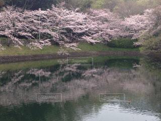 春,池,景色,堺市,泉北,泉ヶ丘