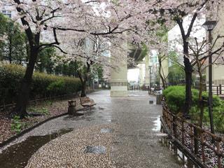 春,桜,橋,東京,ベンチ,川,高速道路,道,雨上がり,和風,深川,江東区,親水公園,木場,木場親水公園