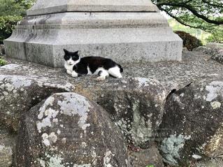 猫の写真・画像素材[468655]