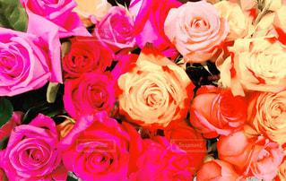 近くの花のアップの写真・画像素材[883629]