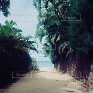 ビーチへ続く道の写真・画像素材[883633]