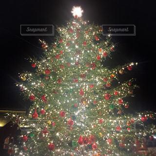 クリスマス ツリーのビューの写真・画像素材[883706]